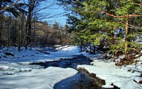 inverno, foresta, piccolo fiume, natura