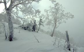 winter, trees, nature