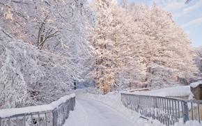 冬天, 树, 桥, 道路, 景观