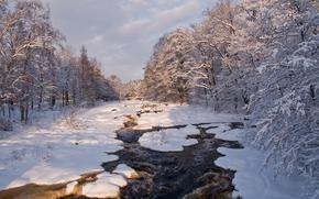 河, 冬天, 树, 景观