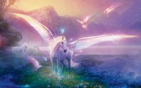 horse, Pegasus, Pigeons, fantasy