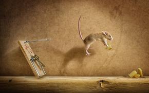 мышеловка, мишь, полёт, сыр