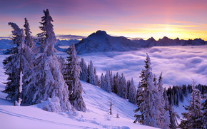 закат, туман, горы, снег, зима, деревья, ели