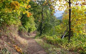 деревья, дорожка, осень, пейзаж