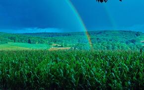 поля, деревья, радуга, пейзаж