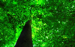 árbol, RAMA, follaje, BARRIL, naturaleza