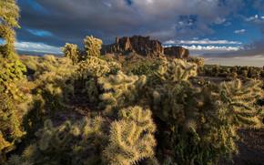 Montagnes, Cacti, ciel, nature
