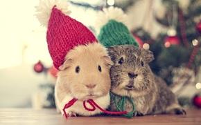 Animali, animale, maiale genuino, Natale, volta, contento, vacanze