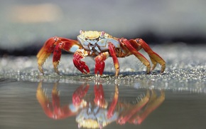 crab, sand, pincers, eyes, shell, reflection, water