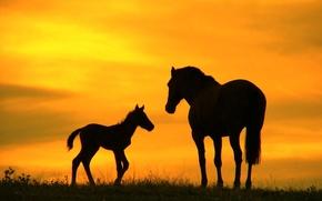 2014, foal, horse, sky, sunset, silhouette