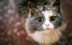 COTE, o un gatto, che invocare la loro