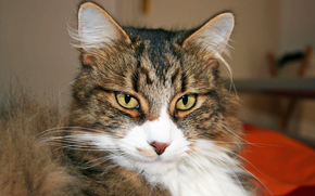 кот, или кошка, непонятно