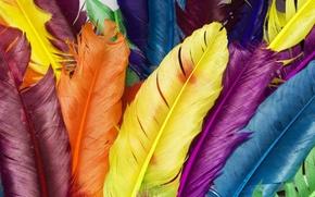 plumage, COLOR, rainbow