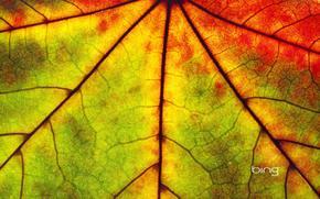 лист, клен, цвет, осень