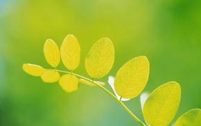 лист, ветка, зелень, свет