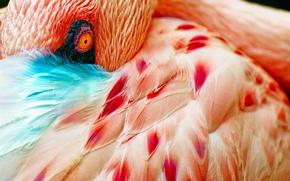 bird, plumage, eye