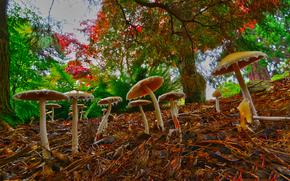 Mushrooms at Point Defiance Park, Tacoma, Washington, деревья, грибы, природа