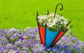 naturaleza, flores, Flor, paraguas, VERANO.