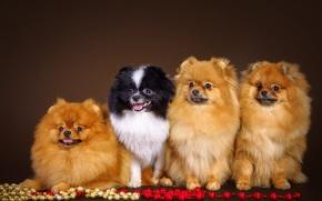Animales, animal, perros, perro