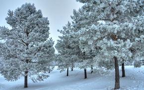 冬天, 树, 雪, 景观