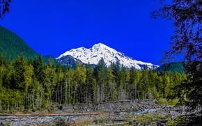 Mount Rainier, Parco Nazionale, Montagne, alberi, paesaggio