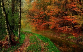 HDR, trees, nature, walk, forest, autumn, leaves, water, river