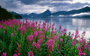 Kenai Fjords National Park, alaska, landscape