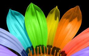 цветок, лепестки, радуга