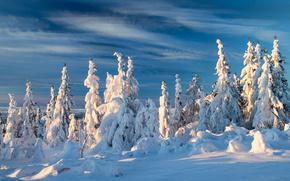 Norway, Норвегия, зима, снег, ели