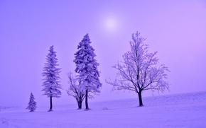 invierno, árboles, naturaleza