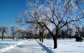 зима, дорога, деревья, пейзаж