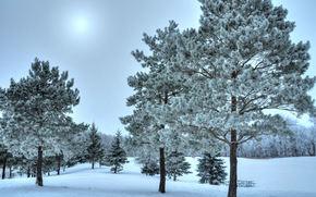Winter, Bäume, Landschaft