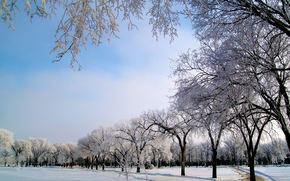 зима, дорога, деревья, парк.пейзаж