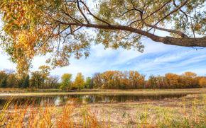 秋, 树, 公园, 池塘, 景观