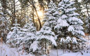 冬, 森, 木, 風景
