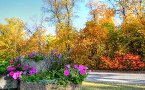 autunno, alberi, parco, aiuola