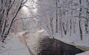 冬天, 潆, 树, 景观