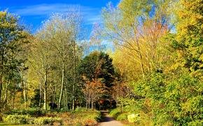 autumn, park, trees, landscape