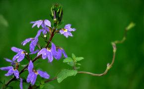 planta, Flores, tallo, Macro