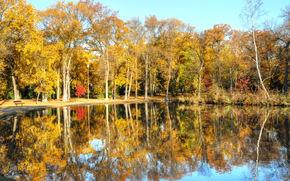 autunno, parco, alberi, lago, paesaggio