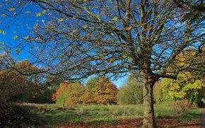 autumn, trees, park, landscape
