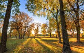 秋, 树, 公园, 景观
