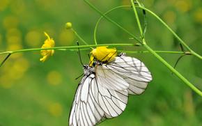 бабочки, цветочки, зеленое.