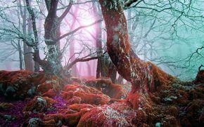 floresta, nevoeiro, árvores, pedras, musgo, natureza