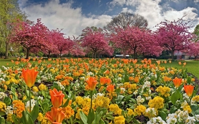 giardino, aiuola, alberi, Fiori, paesaggio