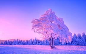 冬, ツリー, 風景