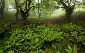 foresta, alberi, natura