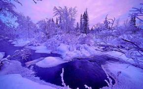冬, 川, 木, 風景