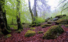 森林, 树, 石头, 性质