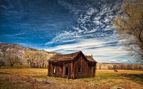 поле, заброшенный домик, деревья, небо, пейзаж